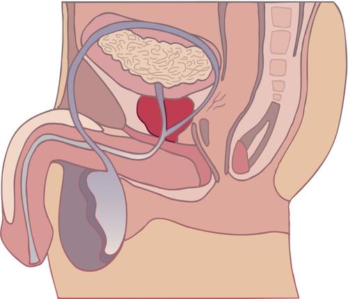 spermaküsse mann g punkt